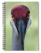 Sandhill Crane 4 Spiral Notebook