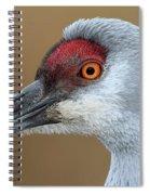Sandhill Crane 6 Spiral Notebook