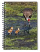 Sandhill Crane And Babies Spiral Notebook