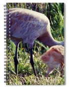 Sandhill Crane And Chick Spiral Notebook