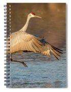 Sandhill Crane Dance Spiral Notebook
