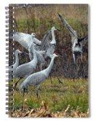Sandhill Crane Spiral Notebook