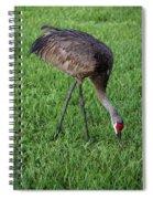 Sandhill Crane II Spiral Notebook