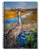 Sandhill Crane In The Glades Spiral Notebook