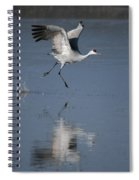 Sandhill Crane Running On Water Spiral Notebook