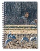 Sandhill Crane Series #3 Spiral Notebook
