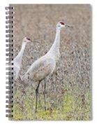 Sandhill Crane Stroll, Antigone Canadensis Spiral Notebook