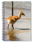 Sandhill Crane With Chick Spiral Notebook