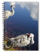 Sandhill Cranes At The Lake Spiral Notebook