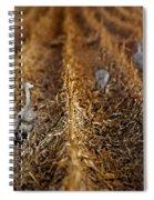 Sandhill Cranes - Cornfield Spiral Notebook