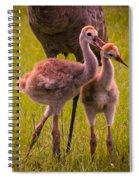 Sandhill Cranes Playing Spiral Notebook
