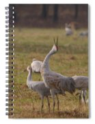 Sandhill Delight Spiral Notebook