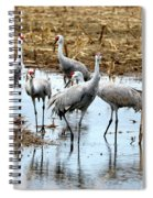 Sandhill Gang Spiral Notebook