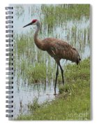 Sandhill In The Marsh Spiral Notebook