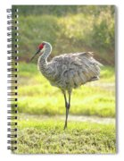 Sandhill Morning Fluff Spiral Notebook