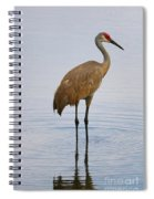 Sandhill Standing In Peaceful Pond Spiral Notebook