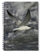 Sandwhich Tern Flies Over Stormy Waves Spiral Notebook