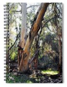 Santa Barbara Eucalyptus Forest Spiral Notebook