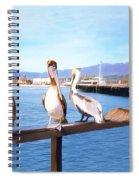 Santa Barbara Pelicans Spiral Notebook