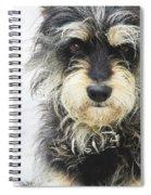 Santorini Dog Spiral Notebook