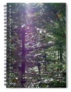 Saplings In The Sun Spiral Notebook