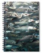 Sardines 1 Spiral Notebook