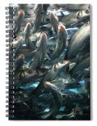 Sardines 2 Spiral Notebook