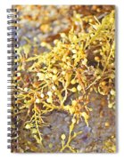 Sargassum Seaweed Spiral Notebook