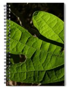 Sassafras Spiral Notebook