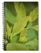Sassafras Tree Spiral Notebook