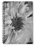 Satin Flora Bw Spiral Notebook