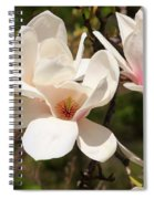 Saucer Magnolia Spiral Notebook