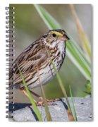 Savanah Sparrow Spiral Notebook