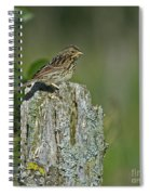 Savannah Sparrow.. Spiral Notebook