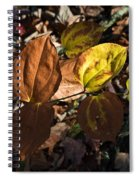 Sawbrier Or Greenbriar In The Fall Spiral Notebook