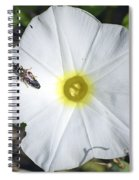 Sawfly On A Beach Morning Glory Flower Spiral Notebook