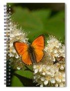 Scarce Copper 2 Spiral Notebook