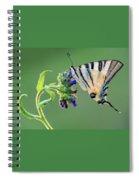 Scarce Swallowtail Spiral Notebook