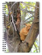 Scared Up A Tree Spiral Notebook