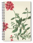 Scarlet Flowered Vervain Spiral Notebook