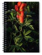 Scarlet Globemallow Spiral Notebook