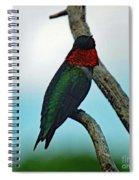 Scarlet Gorget - Ruby-throated Hummingbird Spiral Notebook