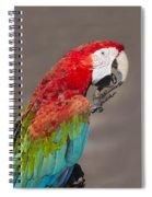 Scarlet Macaw - 2 Spiral Notebook