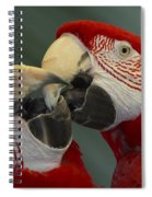 Scarlet Macaw Ara Macao Pair Kissing Spiral Notebook