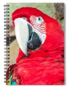 Scarlet Macaw Face Spiral Notebook
