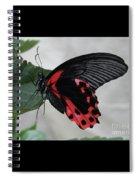 Scarlet Mormon Butterfly #2 Spiral Notebook