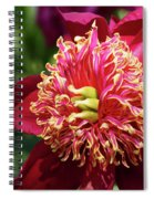 Scarlet Peony Spiral Notebook
