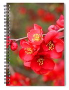 Scarlet Quince Blooms Spiral Notebook