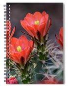 Scarlet  Spiral Notebook