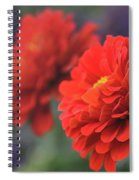 Scarlet Zinnias Spiral Notebook